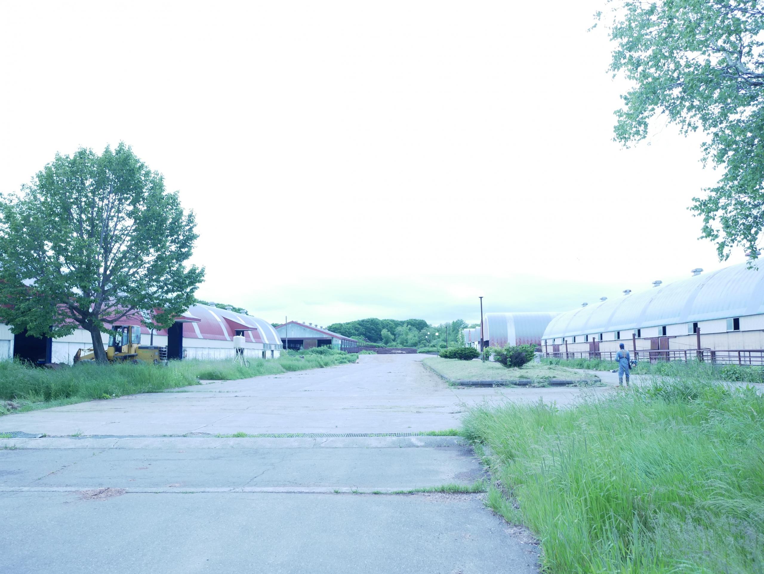 北海道帯広での牧場見学!